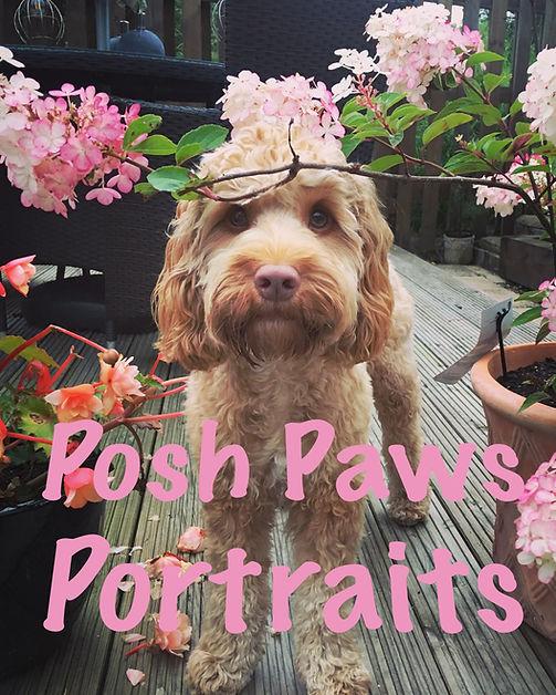 Posh Paws Portraits.jpg