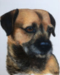 RIA PET PORTRAIT, Border Terrier, Art By