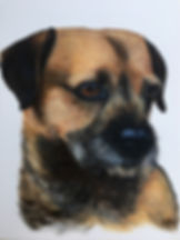 Border Terrier, Ria Pet portrait, Pet portraits by Derbyshire artist Art by Mandy-Jayne Ahlfors ©, www.artbymandy.com