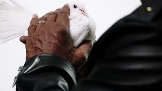 Майк Тайсон в рекламной кампании Roberto Cavalli