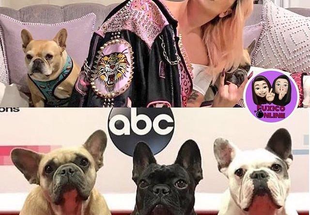 У Леди Гаги украли собак. И выстрелили в ее помощника