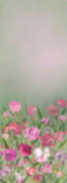 poppies&peoniesforscreen.jpg