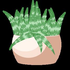 Aveen Succulent