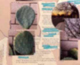 Image of artwork featuring pictures of paddle cactus against wall, photos of trees, and ripped pages