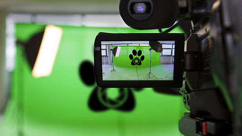 VIDEO-STUDIO-PAW.jpg