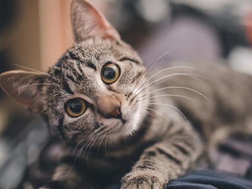 5 coisas que seu gato gostaria de te explicar