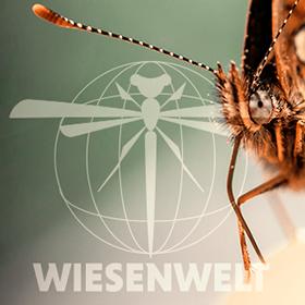 Wiesenwelt.png