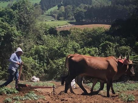 ¿Cuáles son los beneficios de la agricultura y los agricultores?