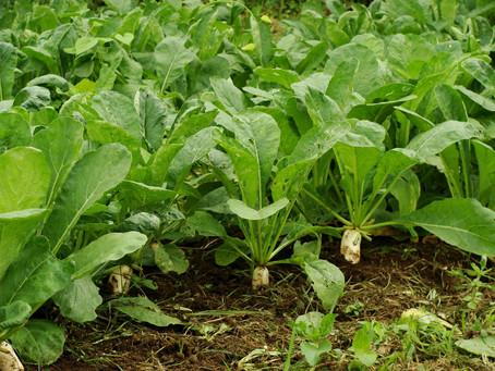Retos para el pequeño agricultor con la falta de claridad en la política agraria