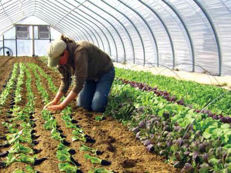 Calidad productiva en el sector hortícola de Costa Rica