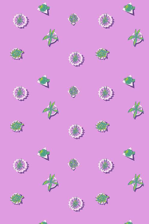 030 Summer Succulent Geo