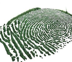Green Grass Print Maze Graphic.JPG