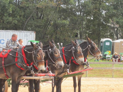 10bobby-mules