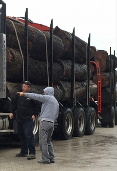 Eddie with Logs.png.opt307x449o0,0s307x4