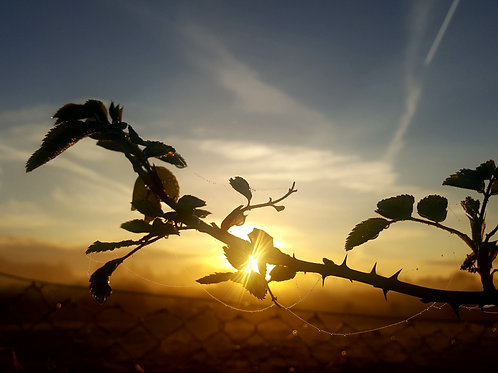Sunrise on Roses