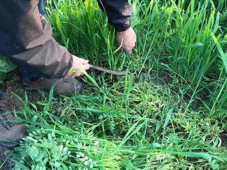 De krekel en de mier: een tuinfabel