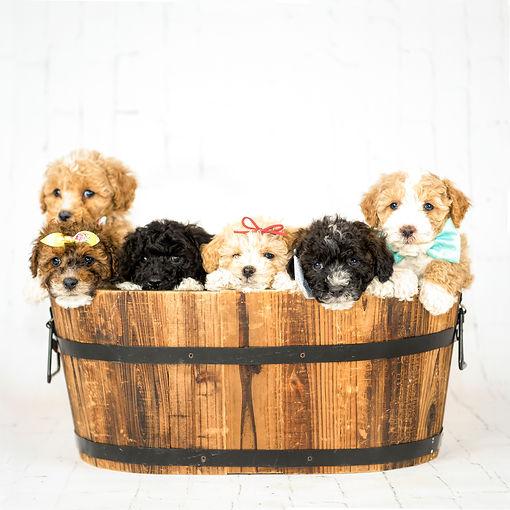 group in bucket.jpg