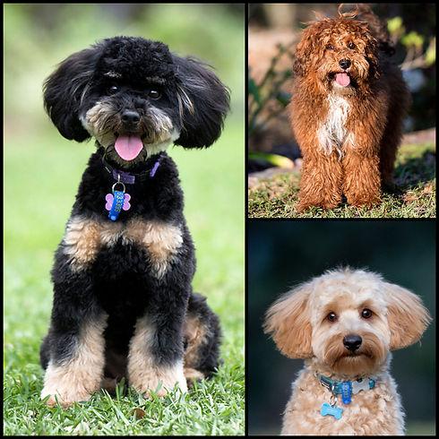 Harlow, teddy and eddy.JPG