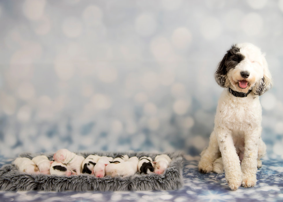 family 1 week old.jpg