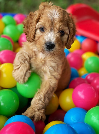 ted in ball pit.jpg