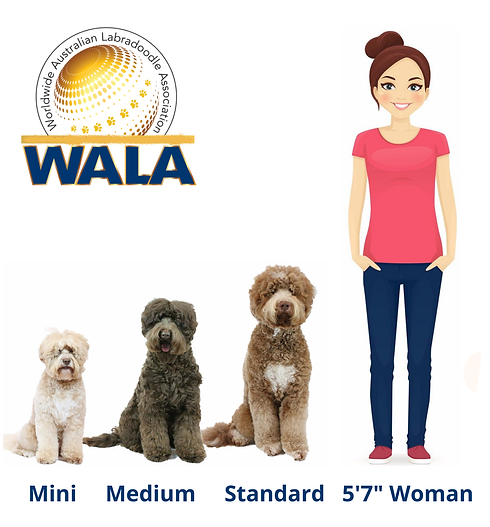 WALA size chart.png