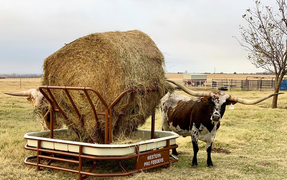 The Cattlemen hay feeder with a round bale from Western Pro Feeders with two longhorn steers