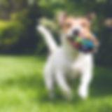De hond die met speelgoed