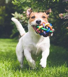 pension canine 44 - garde chien 44 - pension pour chiens 44 - Arche de Lily - Guerande