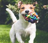 Biosa Pet hund