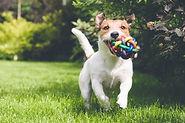 Puppy having fun