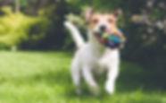 Dog Training in Woolmer Green