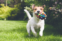dog training with toys