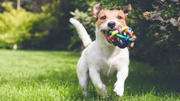 כל מה שרציתם לדעת על כלבים קטנים