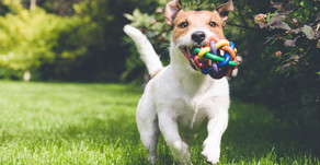 Homeopathic Pet Care