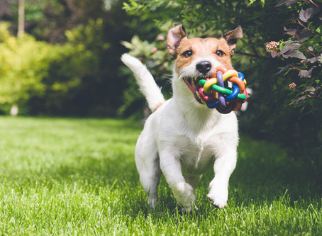Can't Get Your Dog To Stop Chewing?