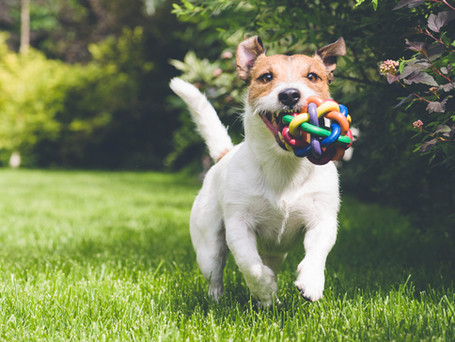 Protect Your Pets with Organic Lawn Care
