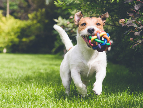 Guest Post: Pet Love Can Save you During Lockdown