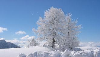 janvier 2008 058.jpg