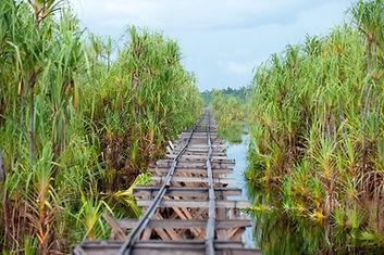 Railway from the Post (7) - Sabangau - A