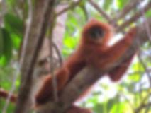 Karen Group BD (3) - Sabangau Forest - C