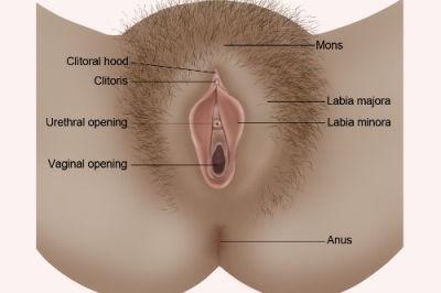 female-genital-anatomy.jpg