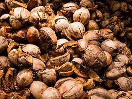 home-coconut-fibre.jpg
