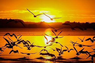 Alberta Beach Birds