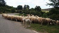 sheep-1202737_1920.jpg