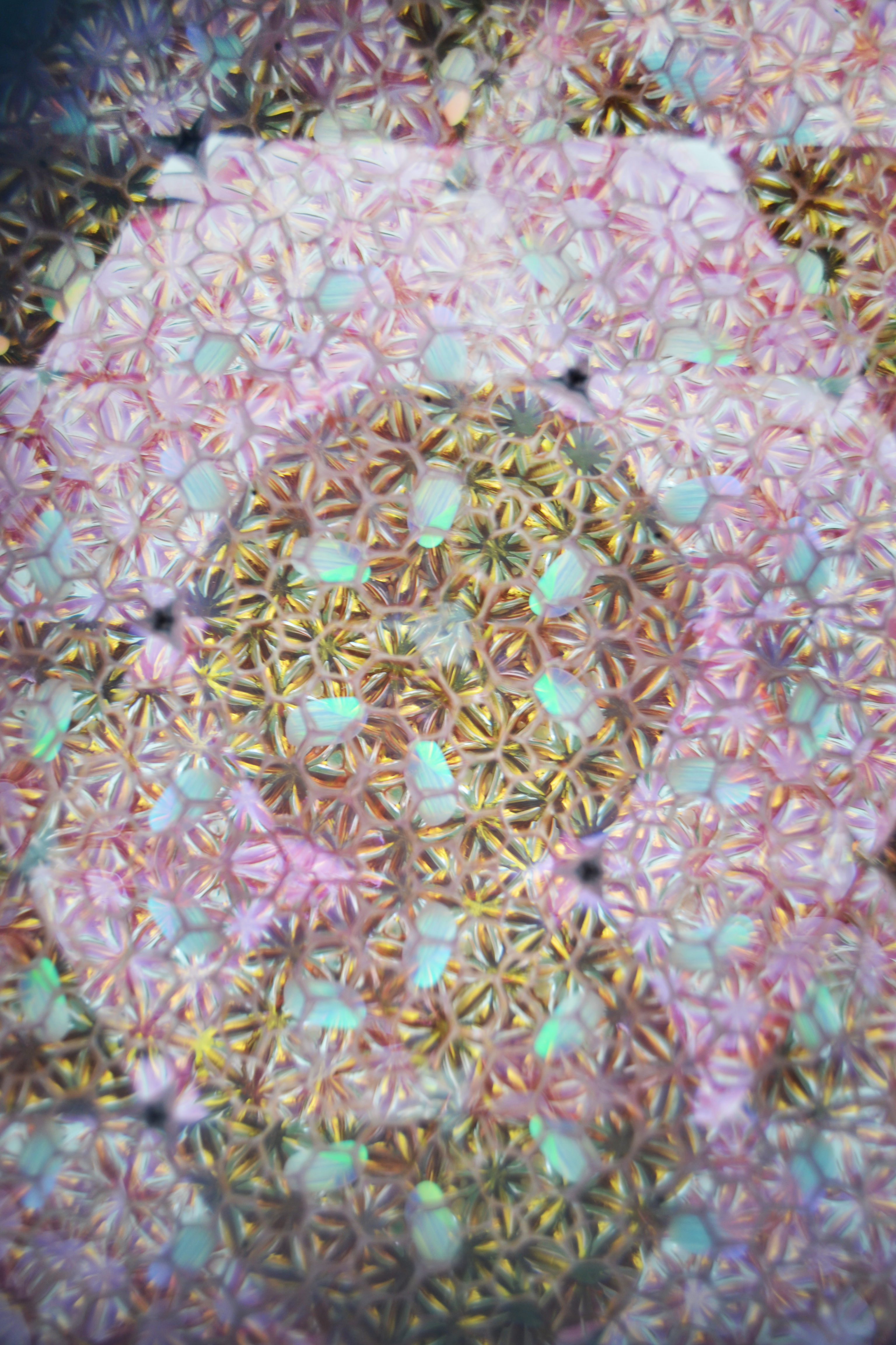 chrysanthmum_Interior2