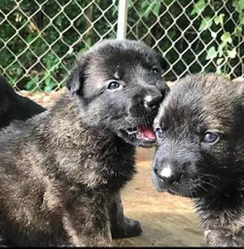 2 puppies.webp