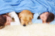 children and a dog resting on a clean carpet