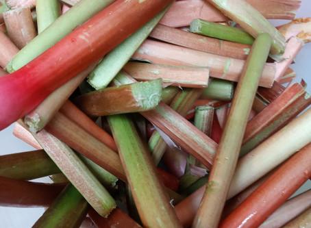 It's rhubarb time