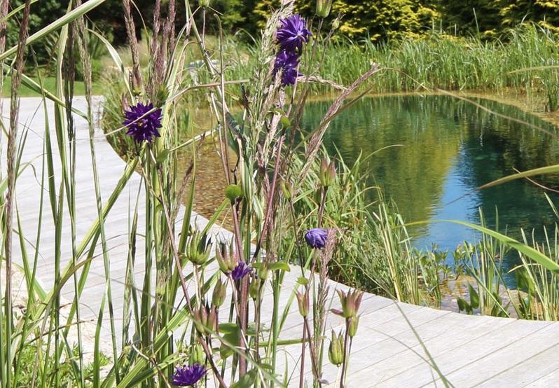 Aquatic Planting - Swimming pool