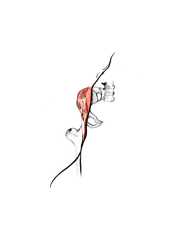 bonesmuscle2.jpg